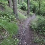 Schmale Passagen durch dichtes Unterholz